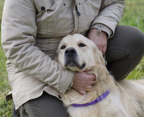 consigli del veterinario comportamentalista