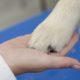 La visita ortopedica nel cucciolo